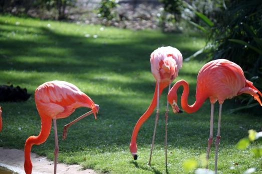 tree+honolulu zoo 061